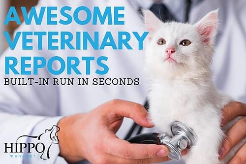 awesome veterinary reports white kitten