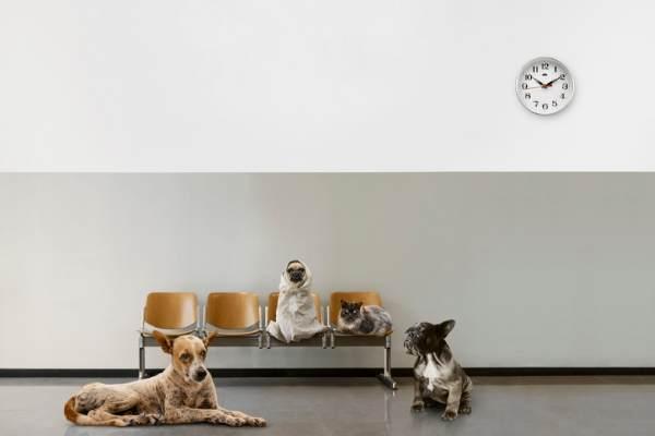 conducting veterinary telehealth pet waiting room