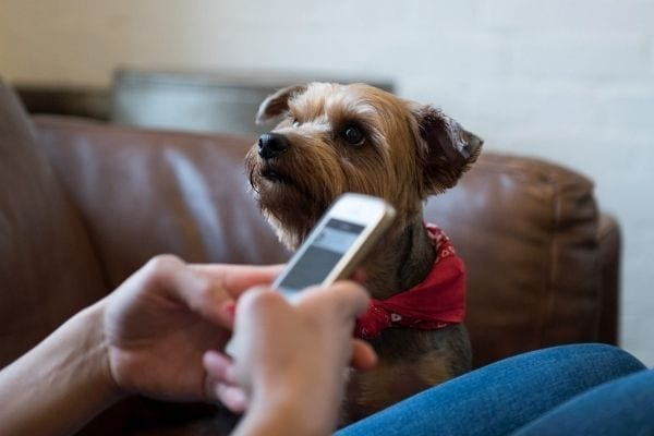 elements of a successful veterinary client callback system text messaging