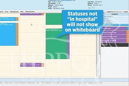 new whiteboard functionality in Hippo Manager in-hospital status
