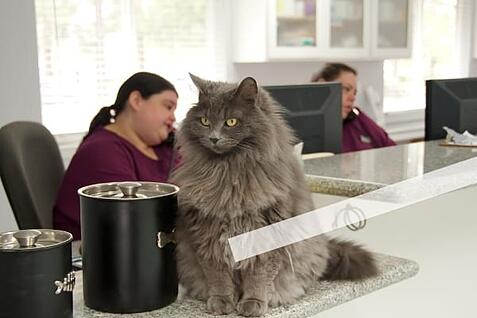 veterinary hospital multi-unit price consistency cat at reception