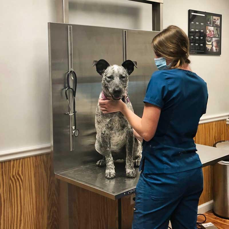 Small Animal Practice Veterinary Software Vet Tech