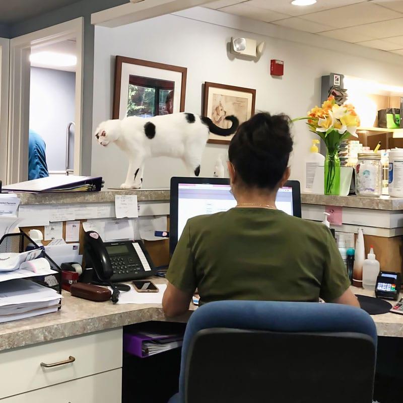 Veterinary Workstation Front Desk Staff