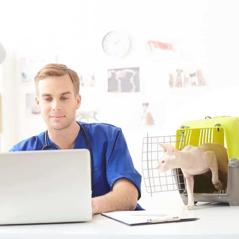 veterinary-data-migrations-vet-and-cat-header-image-square